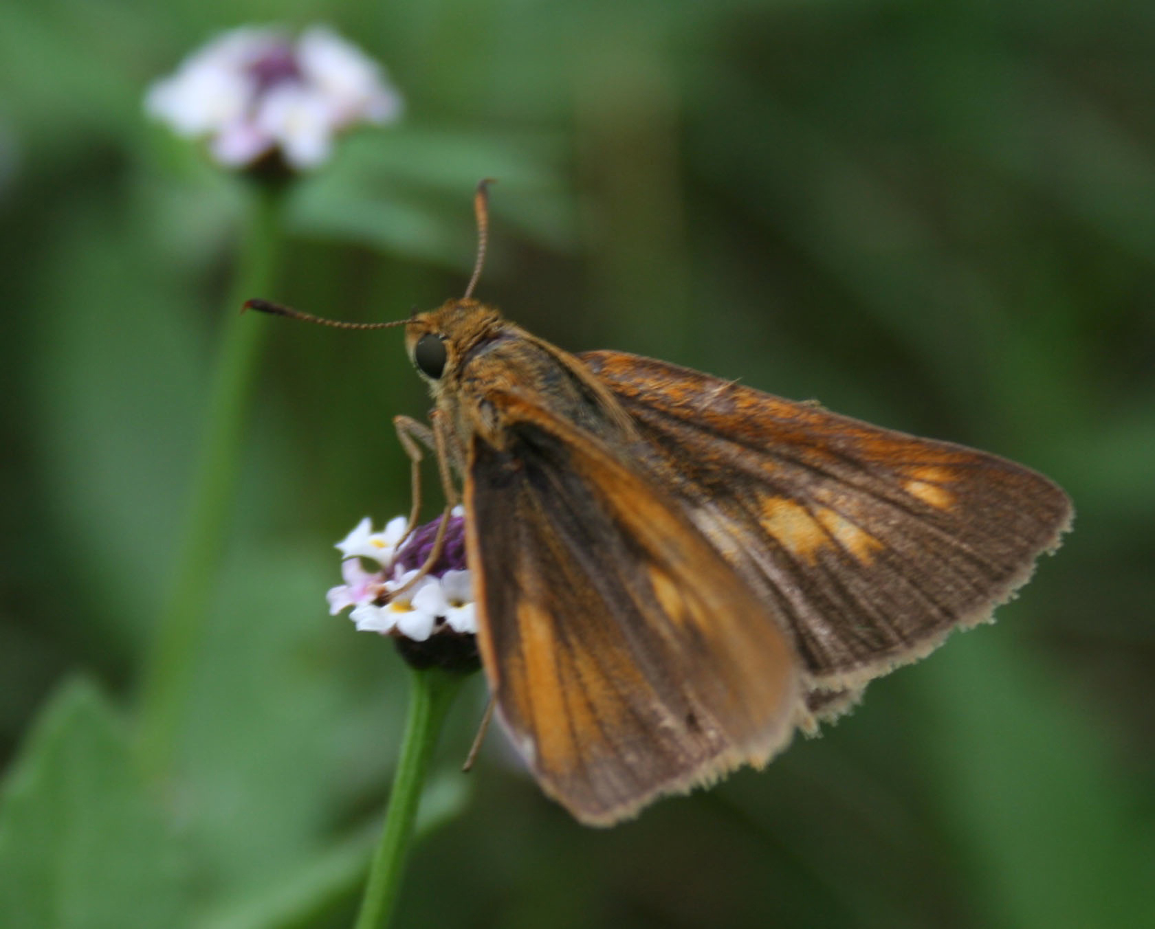 Bay Skipper: David Sarkozi
