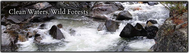 Clean Water, Wild Forest Banner