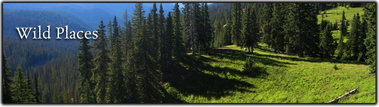 Wild Places Web Banner
