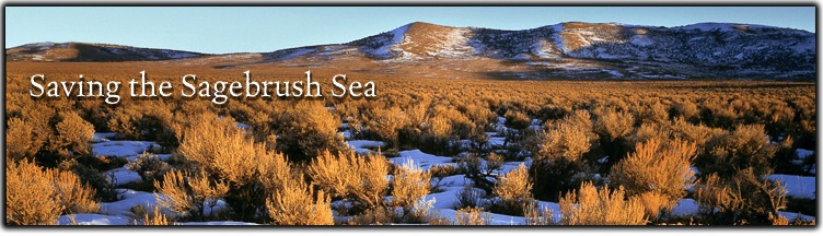 Saving the Sagebrush Sea Web Banner