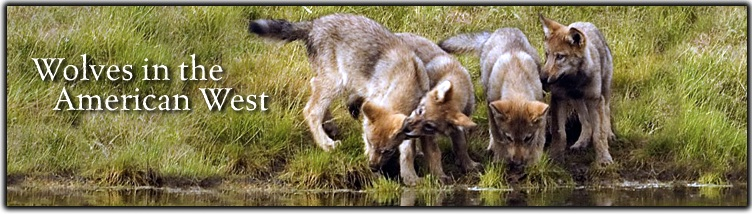 Wolves in the American West Web Banner