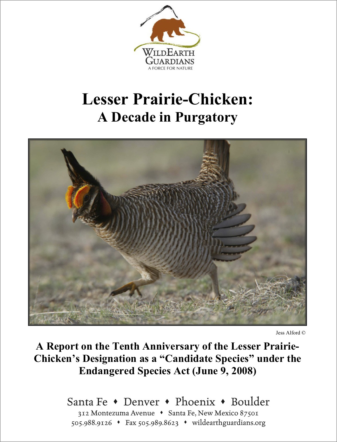 Lesser Prairie Chicken A Decade In Purgatory report