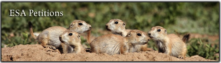 ESA Petitions Banner Black-tailed prairie dogs Rich Reading