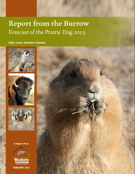 2013 Report from the Burrow cover