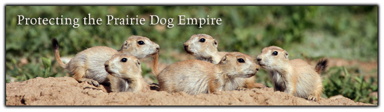 Banner Black tailed Prairie Dogs pc Rich Reading