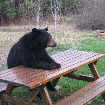 Bear picnic pc www.familyfrugalitynfood.com