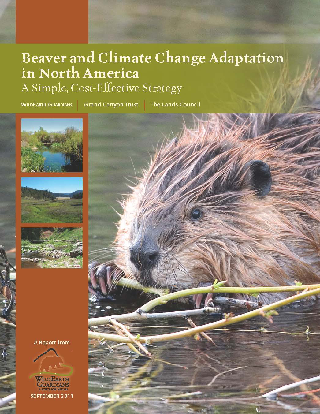 Beaver and Climate Change Report Cover Image