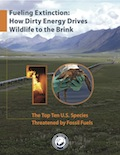 Fueling Extinction Report Cover