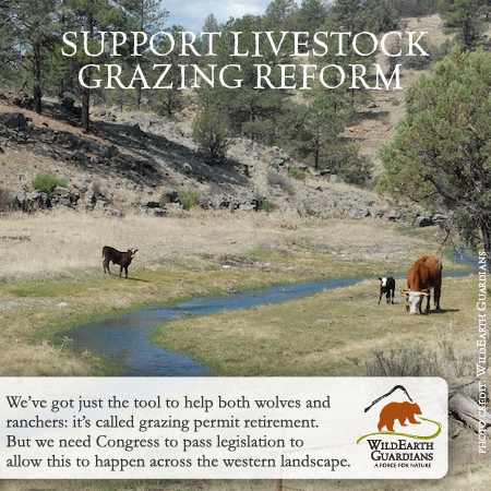 grazing reform meme