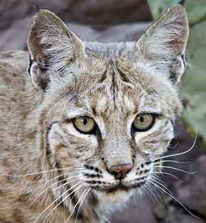 Lawsuit-filed-against-federal-wildlife-killing-pc-Elroy-Limm