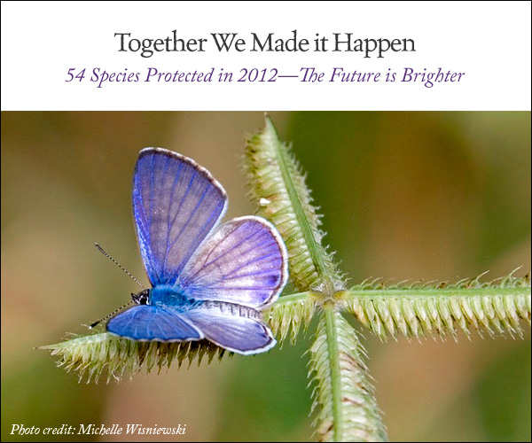 Miami blue butterfly year end fundraiser image