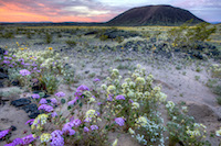 Mojave Trails National Monument pc Bob Wick, BLM