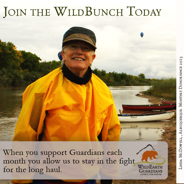 Join the WildBunch Today