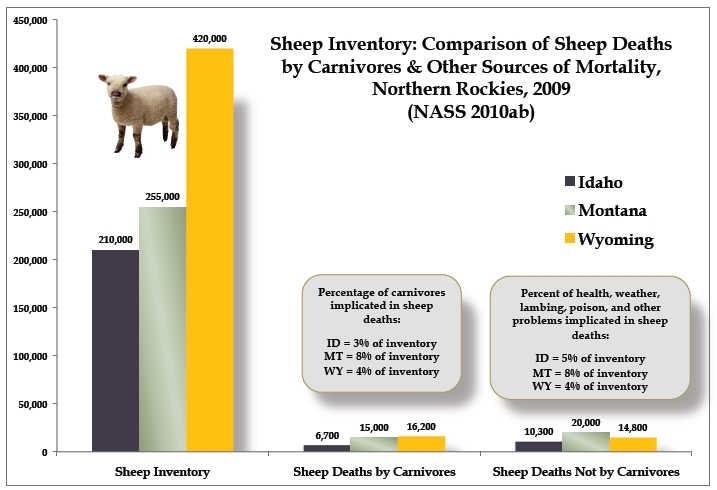 Sheep chart northern Rockies