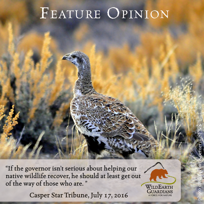 Opinion Meme for Erik's Wy Grouse