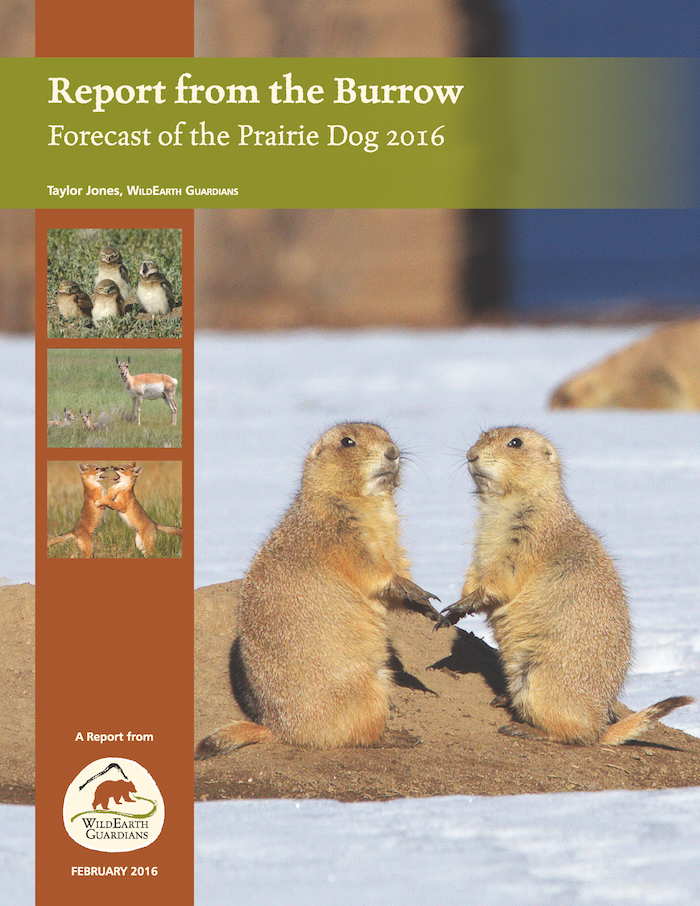 2016 Report from the Burrow Cover Image