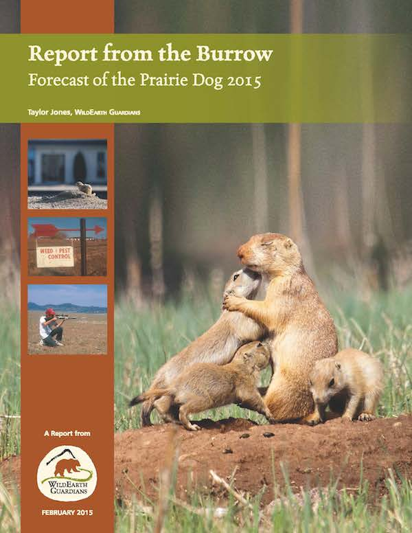 Report from the Burrow 2015 Report Cover