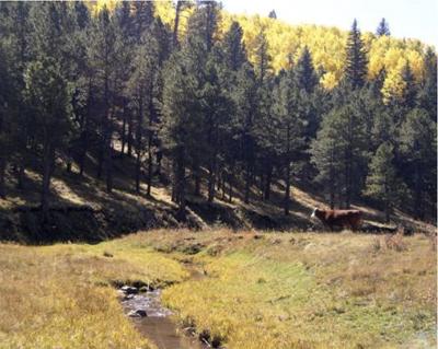 Penas Negras Stream pc Forest Service