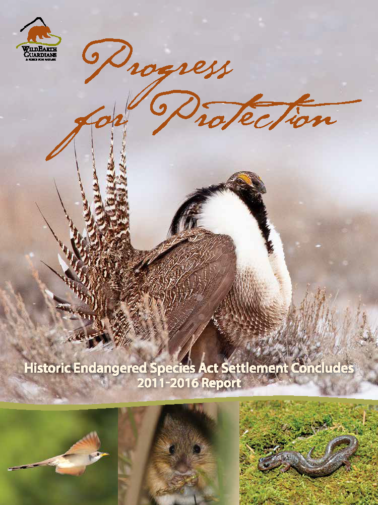 Progress for Protection Report Cover Image