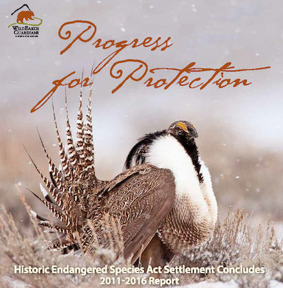 Progress for Protection Report Cover Image cropped