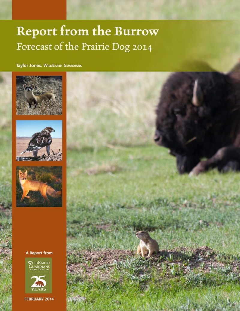 Report from the Burrow 2014 Image Cover