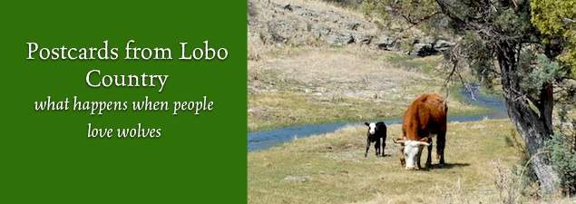 Slider Postcards from Lobo Country pc Bryan Bird