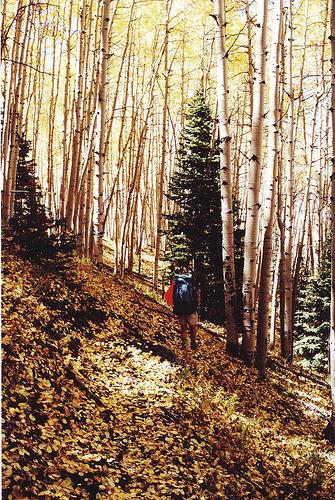Sunset Trail roadless pc Ted Zukoski