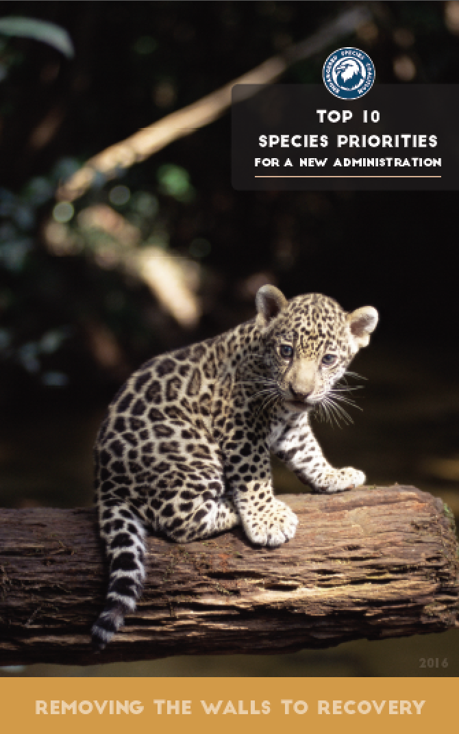 Top 10 Species Report 2016 cover image