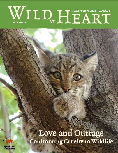Wild at Heart Fall 2015 Cover Image
