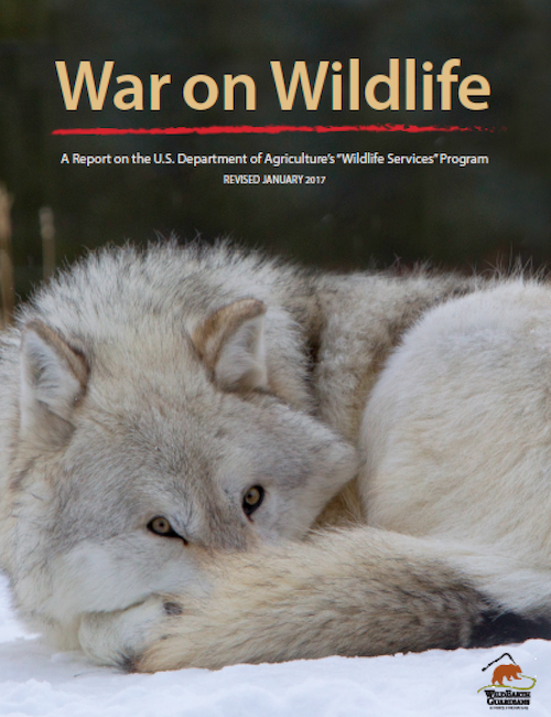 War on Wildlife Report 2017 Cover Image