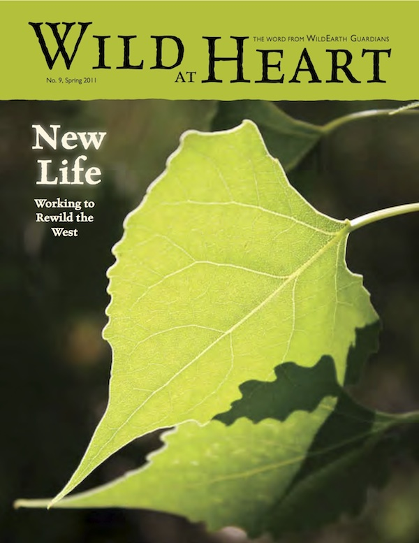 Wild at Heart Issue 9 Cover Image