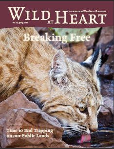 Wild at Heart #12 cover