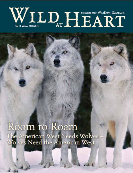 Wild at Heart #14 winter cover