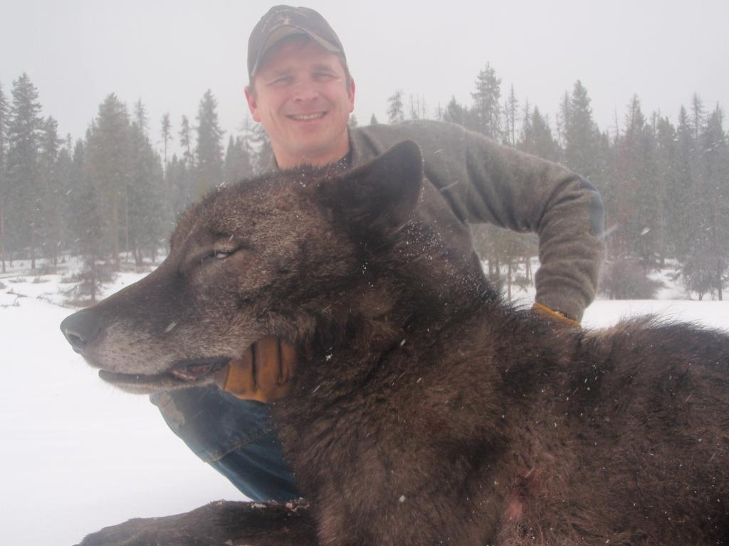 Wolf trapped 3  pc Josh Bransford US Forest Service