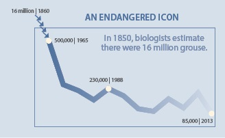 An endangered icon grouse chart