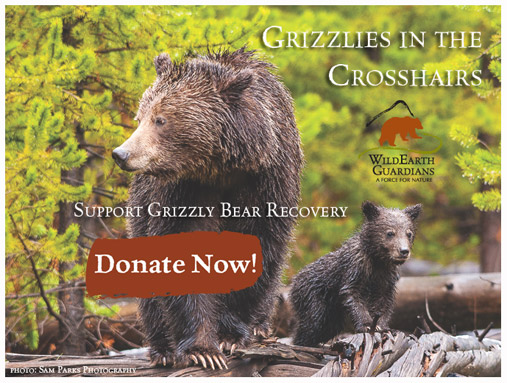 Grizzlies in the Crosshairs. Support Grizzly Bear recovery. Donate Now.