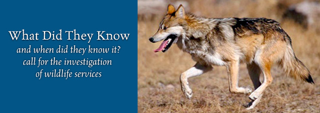 Slider Mexican wolf pc USFWS blue