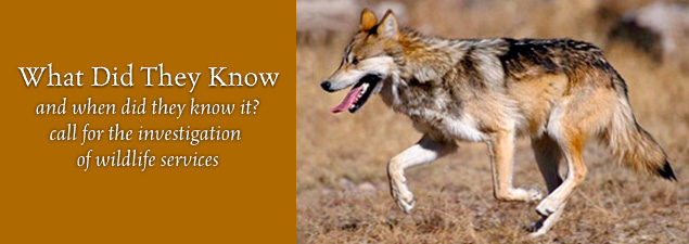 Slider Mexican wolf pc USFWS