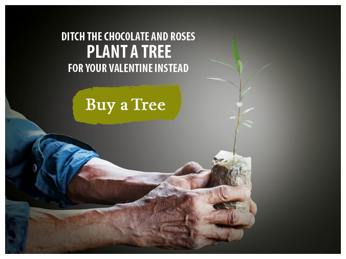 Ditch the chocolate and roses. Plant a tree for your valentine instead. Buy a Tree.