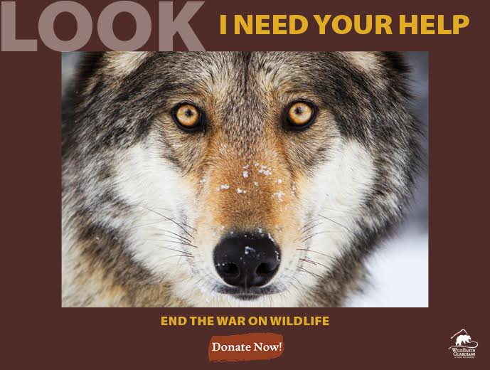 LOOK I need your help. End the War on Wildlife. Donate Now.