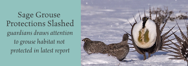 Slider Grouse Report pc Tony Morris CC Flickr