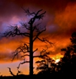 supporters_Sunset_and_tree_pc_Jess_Alford