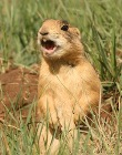 supporters_Utah_prairie_dog_pc_Rich_Reading