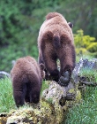 supporters_bears_on_log_pc_Ray_Rafiti