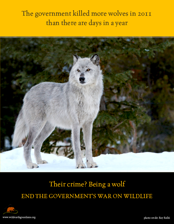 issues faced by wolves