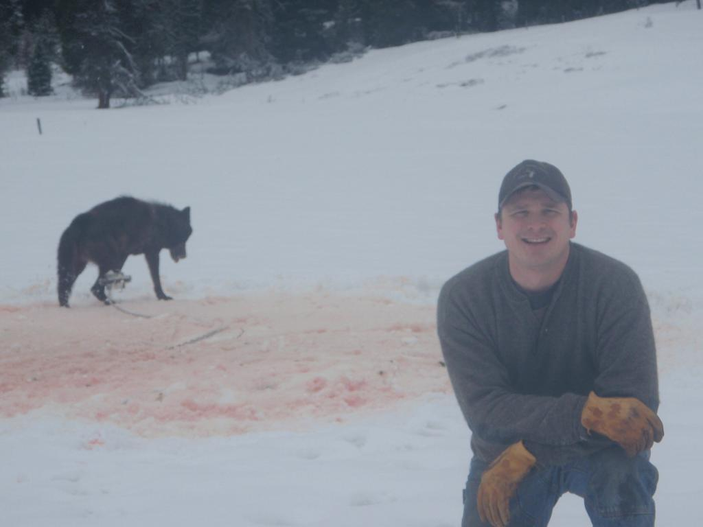 Wolf trapped pc Josh Bransford US Forest Service