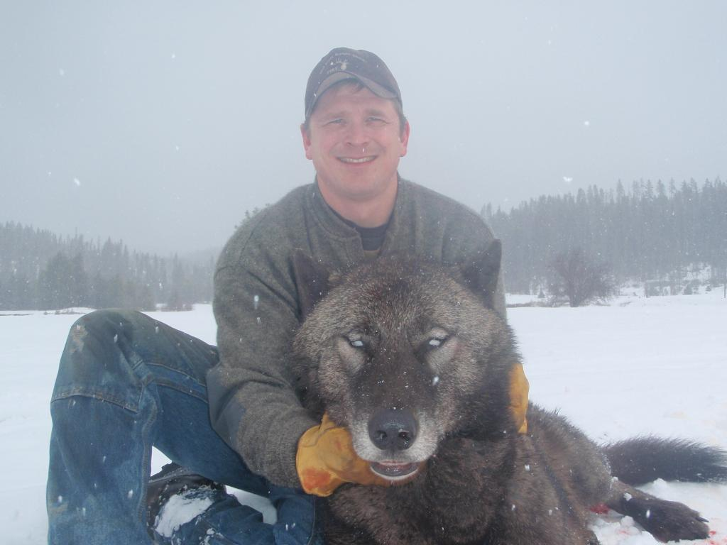 Wolf trapped 4 pc Josh Bransford US Forest Service